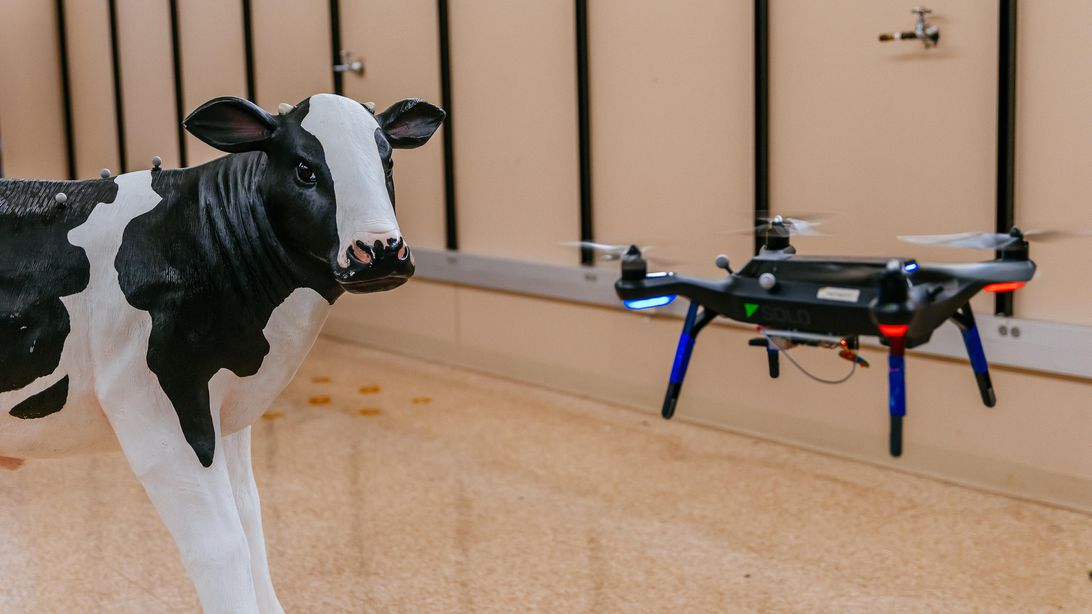 cattle-drones-16